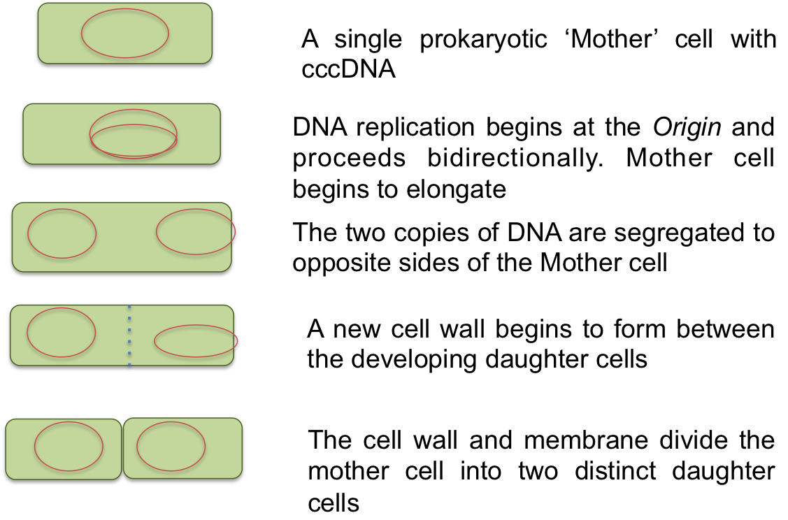 Binary event meaning