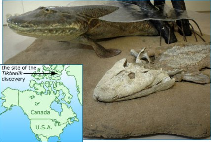 tiktaalik_reconstruction