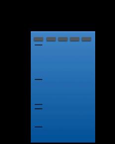 partial gel