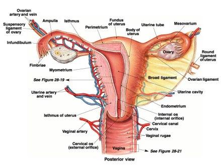 female-5