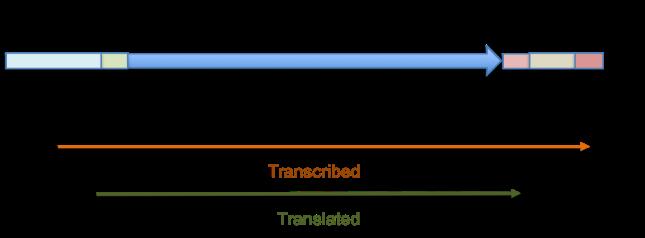 BasicGeneStructure